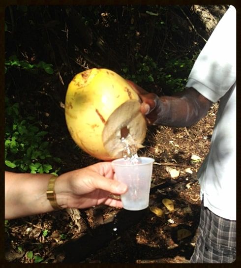 Coconut water St Lucia