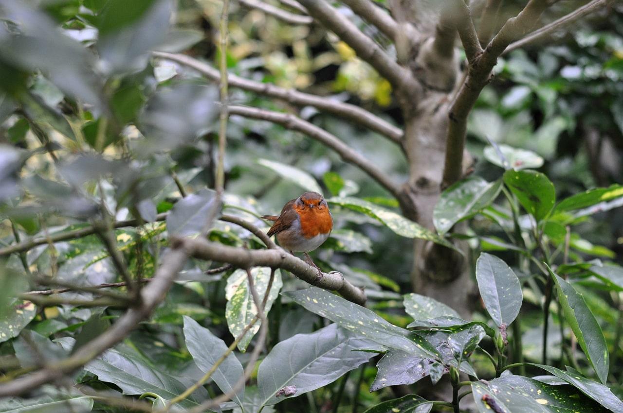 waddesdon-manor-christmas-fair-robin